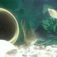 فروش ماهی مول و انجل
