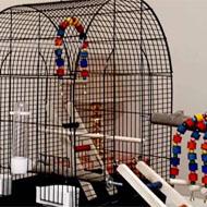 قفس عروس هلندی طوطی برزیلی گرینچیک