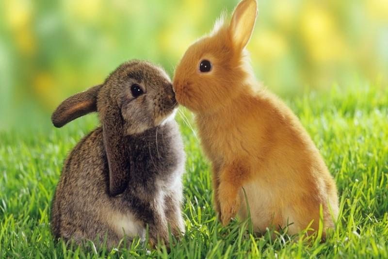 تعبیر خواب خرگوش از دید معبرین اسلامی و غربی