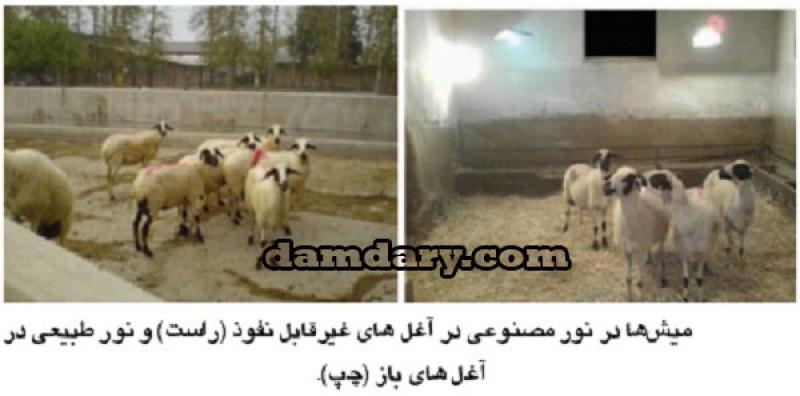 فتوپریود مصنوعی روشی برای ایجاد آبستنی گوسفندان خارج از فصل