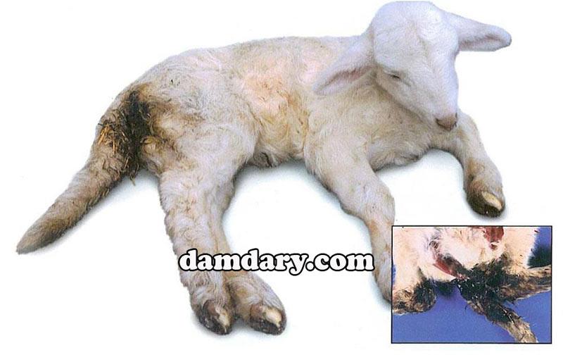 قرص اسهال حیوانات