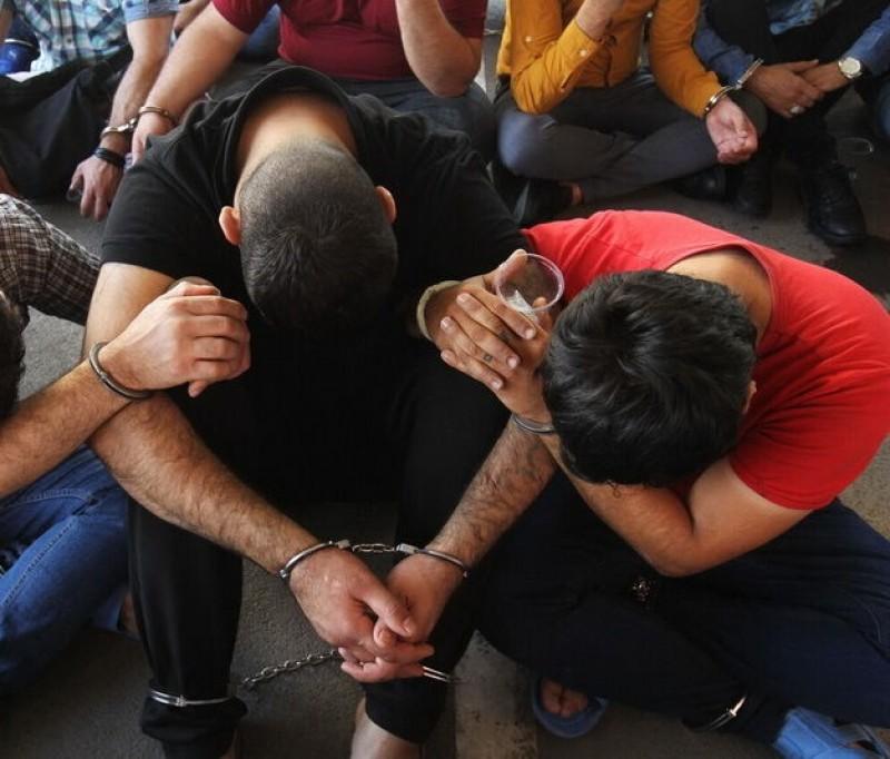 دستگیری باند زندهگیری پرندگان وحشی در دلفان