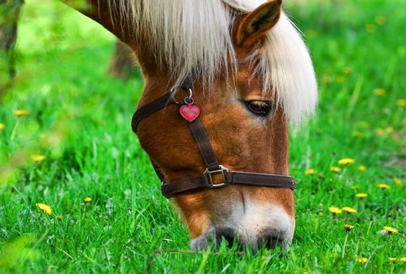 نکات کاربردی در تغذیه اسب ها