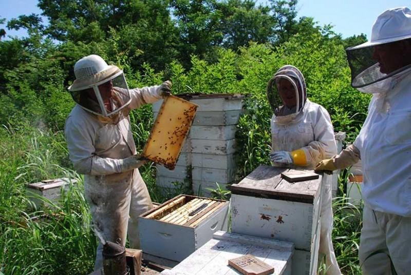 وسایل مورنیاز برای حرفه زنبورداری
