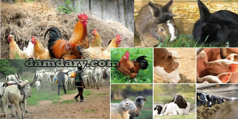با حیوانات حلال و حرام گوشت آشنا شوید