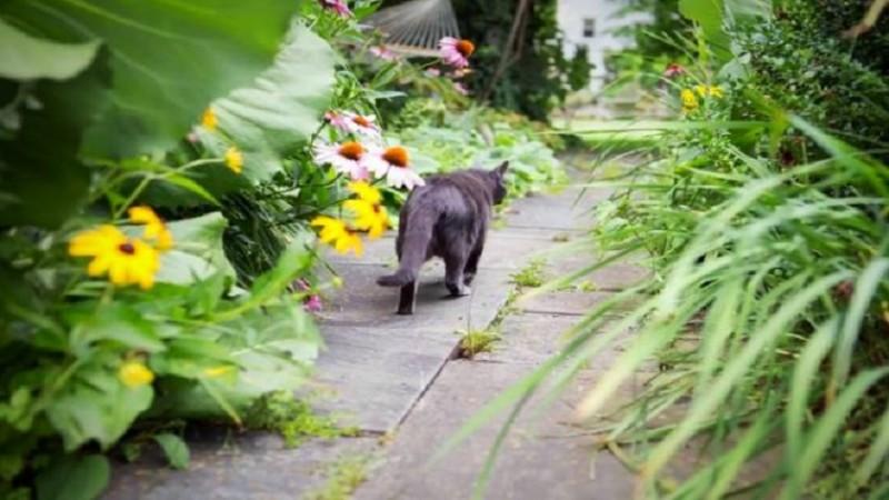 نحوه دور کردن گربه های خیابانی از حیاط خانه و باغچه