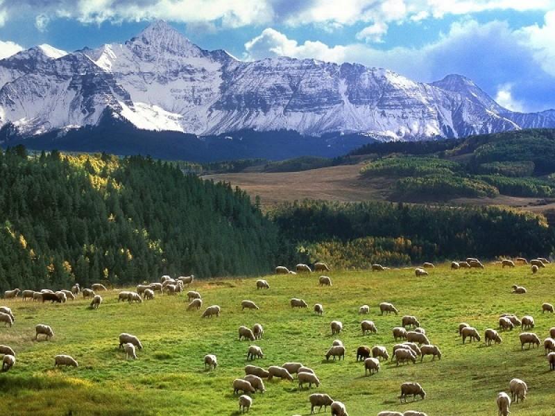 شناخت گیاهان خوش خوراک و سمی برای گوسفندان