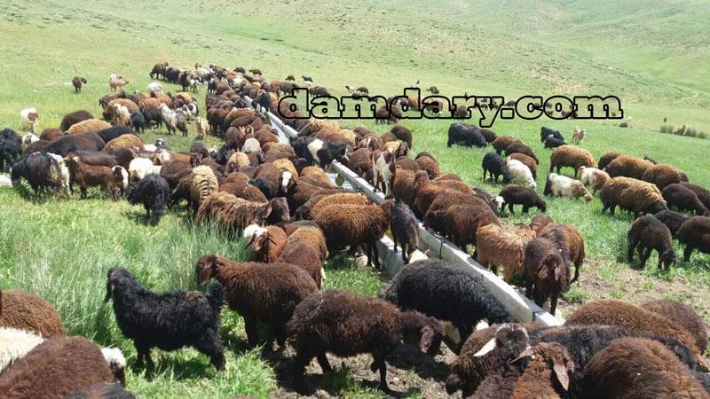 مشاهده قیمت و خرید اینترنتی گوسفند زنده