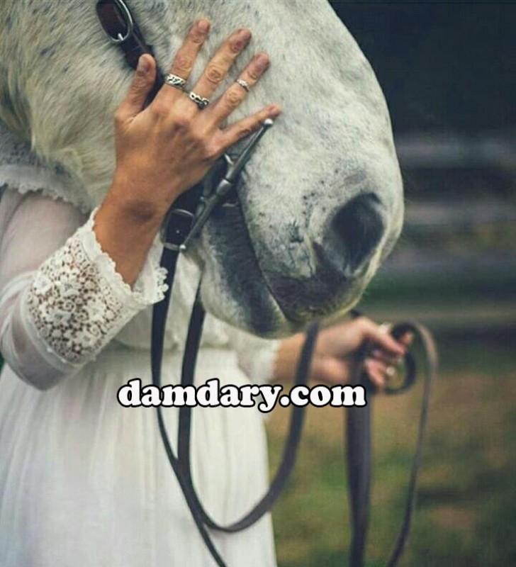 تعبیر خواب افسار اسب