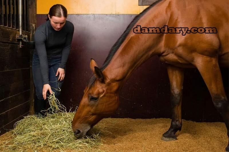 تغذیه اسب و مدیریت برنامه غذایی آن ها