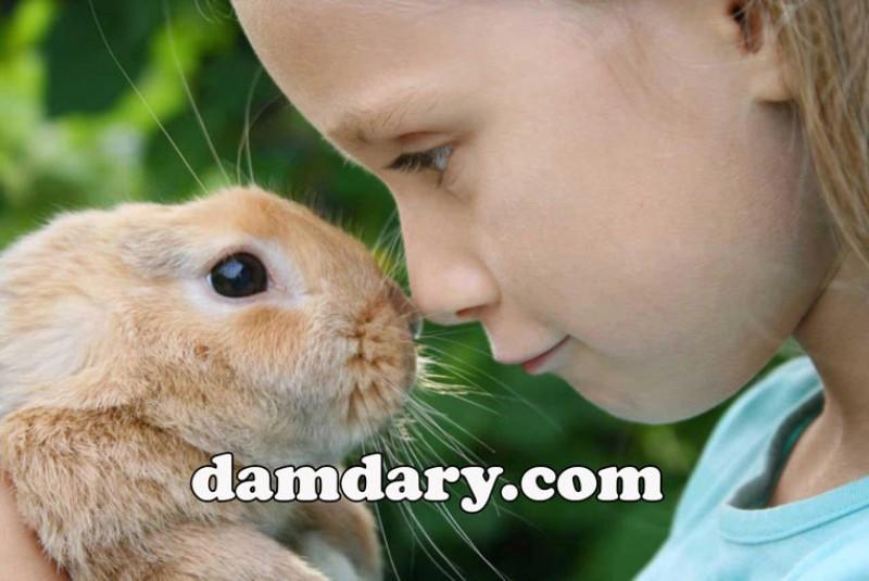 انواع بیماری های قابل انتقال از خرگوش به انسان