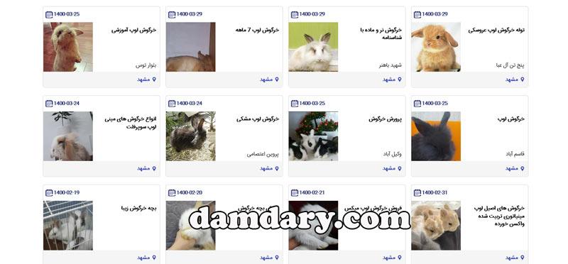 فروش خرگوش در مشهد