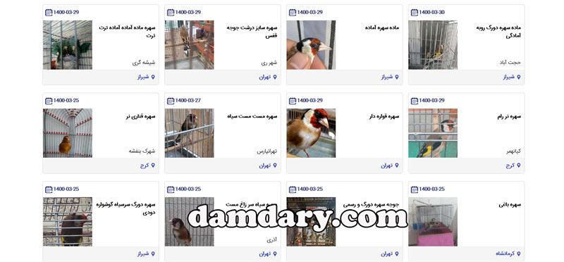 فروش پرنده سهره