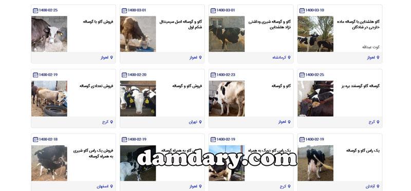 فروش گاو و گوساله پرواری