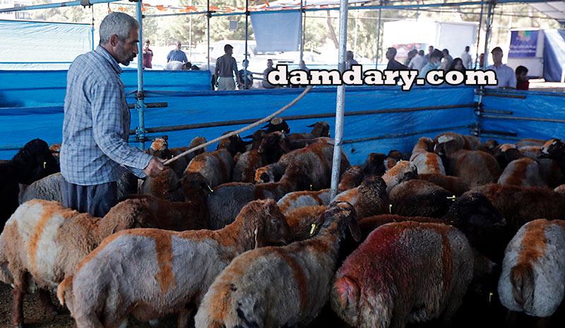 خرید و فروش گوسفند زنده